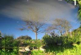 WaterOak-(34)